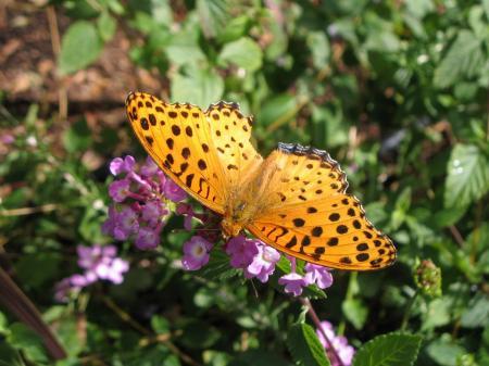 4981蝶