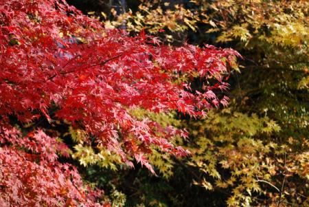 1744紅黄葉