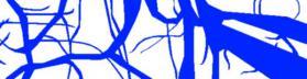 MusashiG3_White Blue