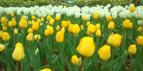 津田写真黄色と白