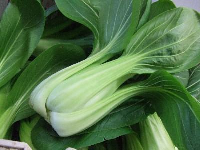 2010_0115チンゲン菜