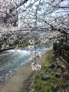 04.15.2011.桜