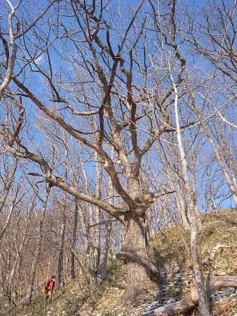 erimo-tree