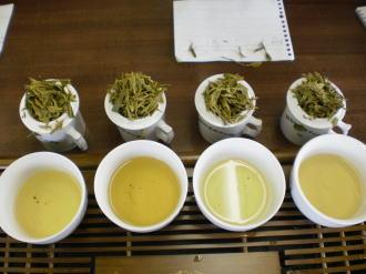 緑茶品評茶