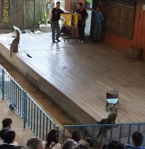 1-zoo 05