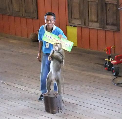 1-zoo 03