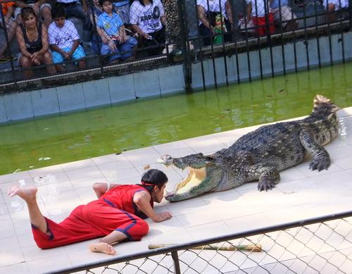 1-zoo 10
