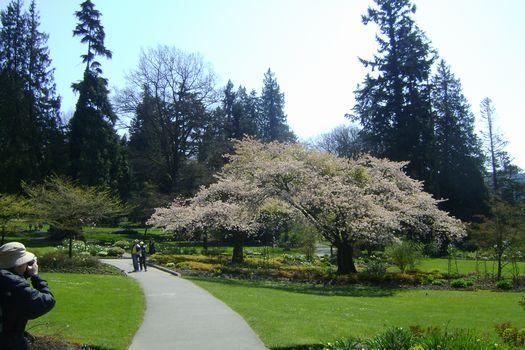 Apr-23-2011 公園の桜