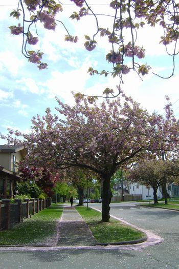 May-14-2011 散歩1