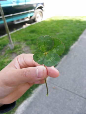 Jun-01-2011 4 leaves clover