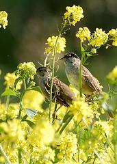 花と小鳥たち