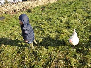 chicken (2)