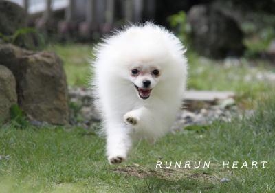 祝乃香(ののか)飛行犬