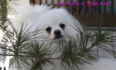 松の木利温(りおん)