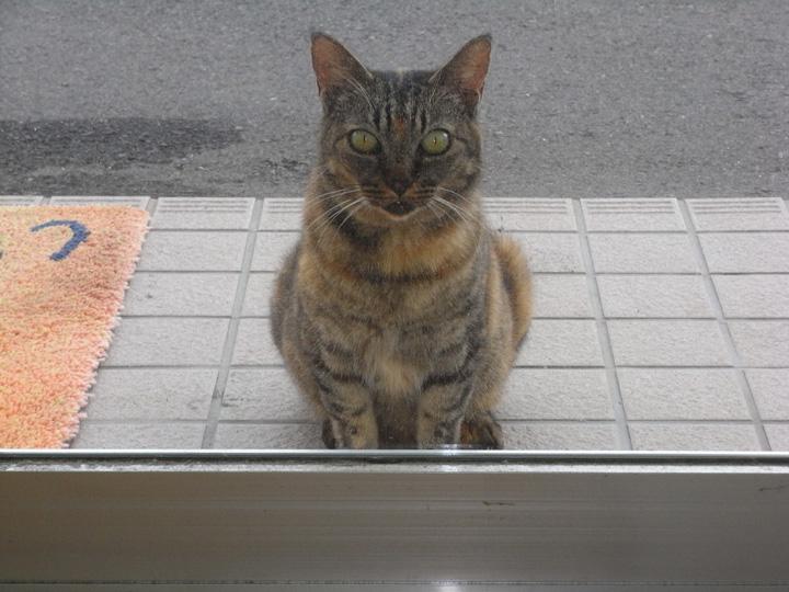 野良猫玄関に待つ
