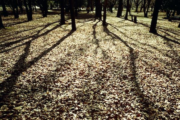 2011-01-1317-20-12.jpg