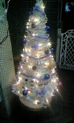 091220クリスマスツリー