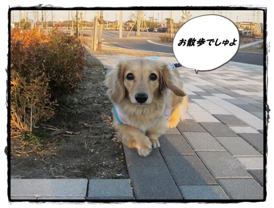2012 ポン太と散歩