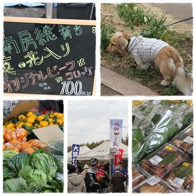 菜の花まつり 2012-5