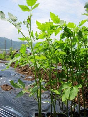 2011年7月2日菱山ぶどう畑ヨガ (6)