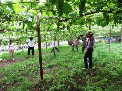 2011年7月2日菱山ぶどう畑ヨガ (26)