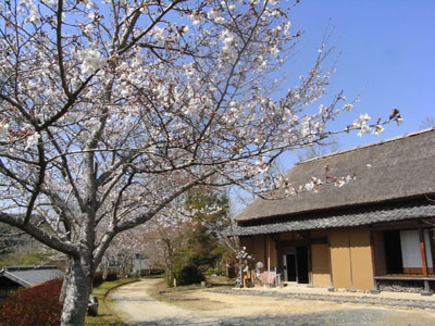 桜201101