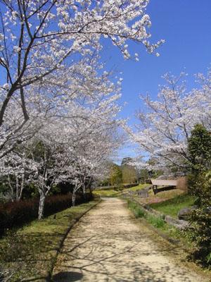 桜201106