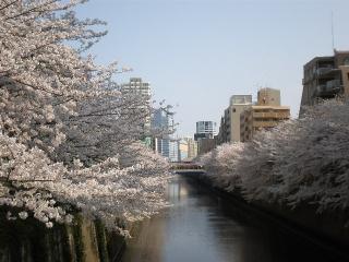 20100410-桜6