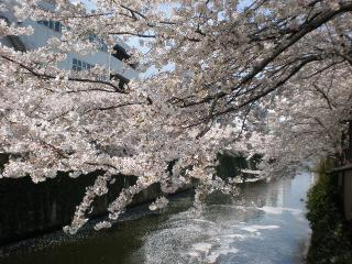 20100410-桜5