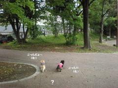 道先案内犬6