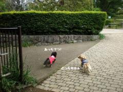 道先案内犬3