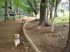 道先案内犬8