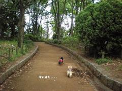 道先案内犬7