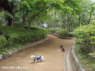 道先案内犬9