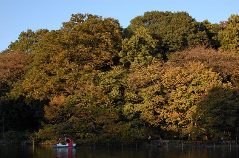 上池色づき樹木