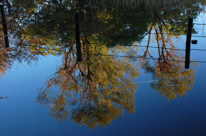 水面に映る樹木