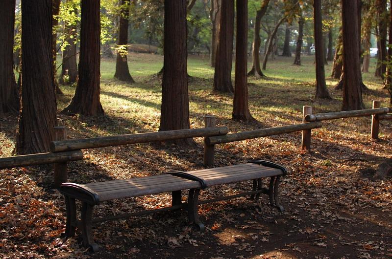 雑木林ベンチ