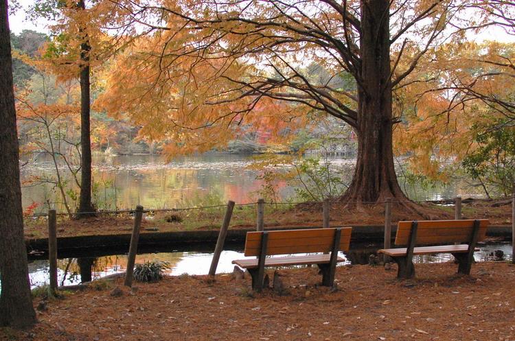 石神井公園3
