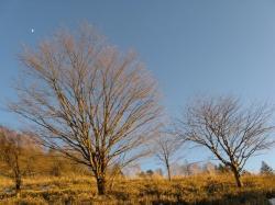 丸川荘 並木
