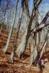 木の下 大菩薩viviter