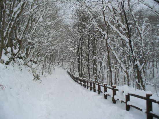 雪の遊歩道