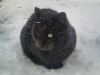 雪をかぶるネコちゃん