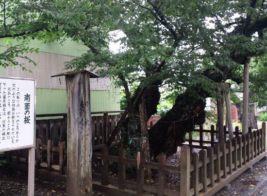 志賀理和気神社-南面の桜01