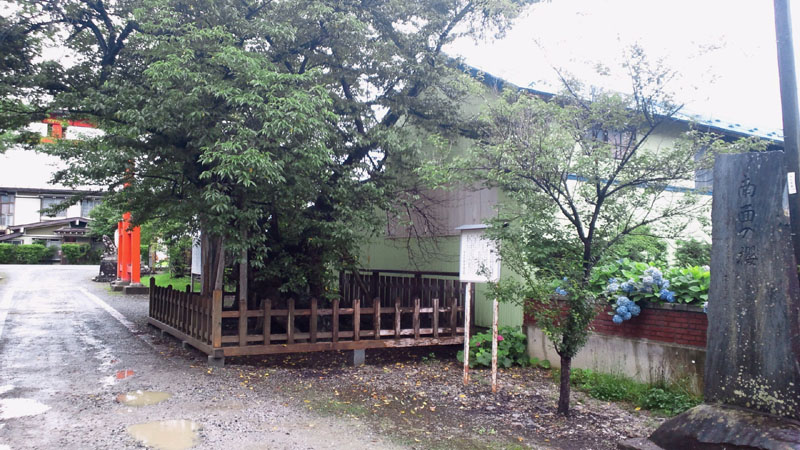 志賀理和気神社-南面の桜04