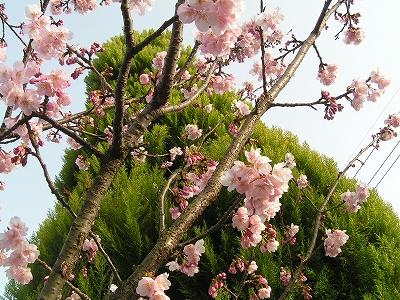 縮小_(2010-03-14)PICT0670