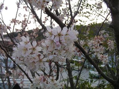 縮小_(2010-03-14)PICT0706