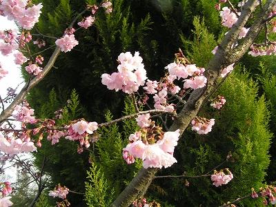 縮小_(2010-03-14)PICT0668