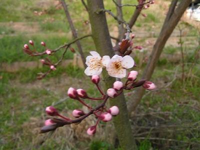 縮小_(2010-03-14)PICT0700