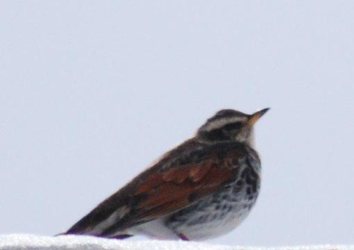 bird16-1.jpg