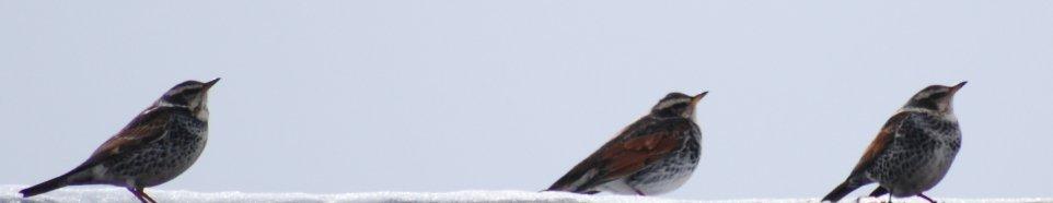 bird16-2.jpg